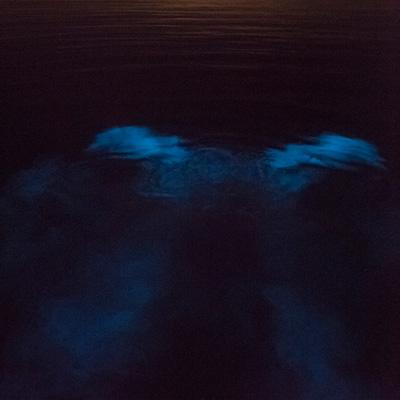 Sunset 'Til Dark Bioluminescence Tour