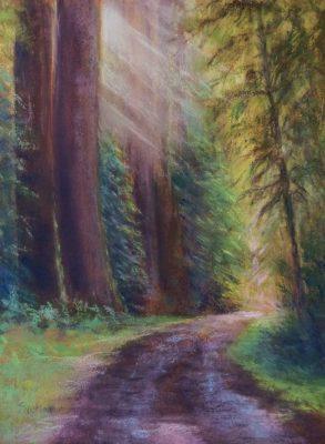 redwooddawn