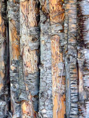 """Mendocino Art Center's """"In Praise of Trees"""" Exhibit"""