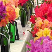 43rd Annual John Druecker Memorial Rhododendron Show - CANCELLED