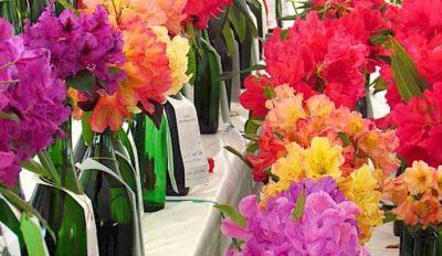42nd Annual John Druecker Memorial Rhododendron Show