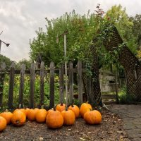 "The Enchanted Pumpkin Path 2017: A magical ""alternative to Trick-or-Treating"" for children"
