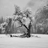 Dolores M. Clark: Yosemite Valley Winterland Show