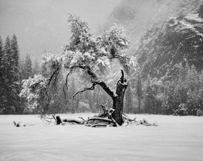 Dolores M. Clark: Yosemite Valley Winterland Show