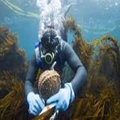 """""""Abalone Diving: A Steven Oakwood Mystery"""" Dinner Theater"""