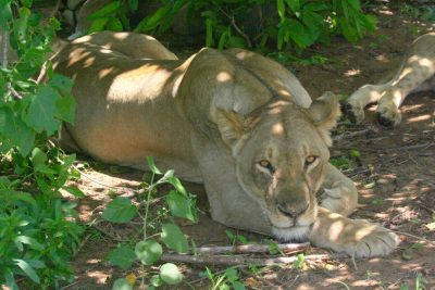 International Wildlife Film Festival opens
