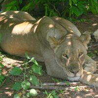 """Predator Night""--International Wildlife Film Fest"