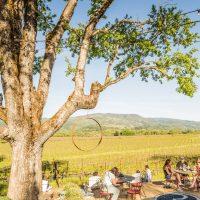 RIVINO Estate Vineyards and Winery