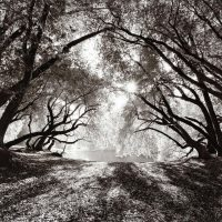 Landscape: Jadelle Andrews, James Maxwell, Robert Taylor