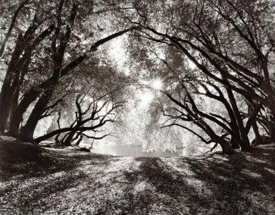 Landscape: Jadelle Andrews, James Maxwell, Robert ...