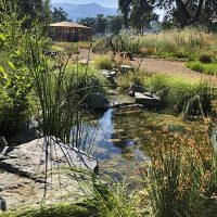 Back to the Gardens: A stroll in Grace Hudson's Wild Gardens