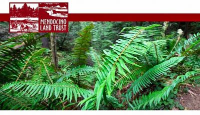 The Mendocino Land Trust is searching for a new De...