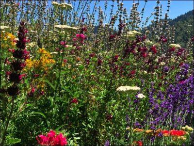 Mendocino County Herb Guild Spring Market